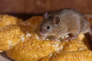 dtimwmgzb5c2 Entreprise de Dératisation des Rats & Souris Le Cannet