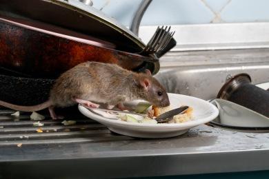 h1mxen3th4ua Entreprise de Dératisation des Rats & Souris Le Cannet