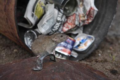 w9du5qlbwjcb Entreprise de Dératisation des Rats & Souris Le Cannet